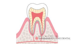 歯の仕組み
